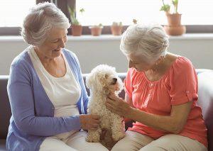 seniors helping seniors denver